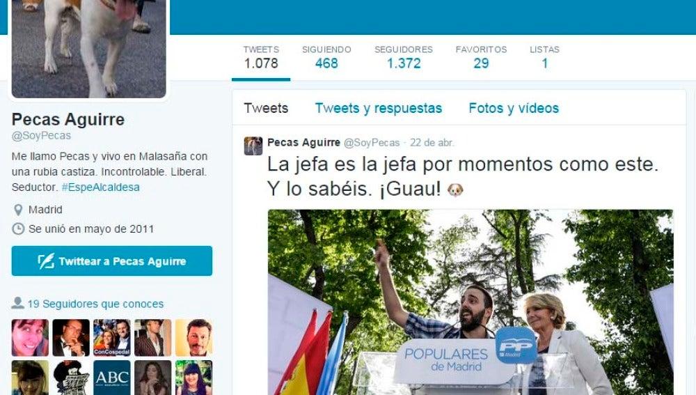Cuenta en Twitter de 'Pecas', el perro de Aguirre