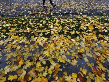 Un camino lleno de hojas caducas