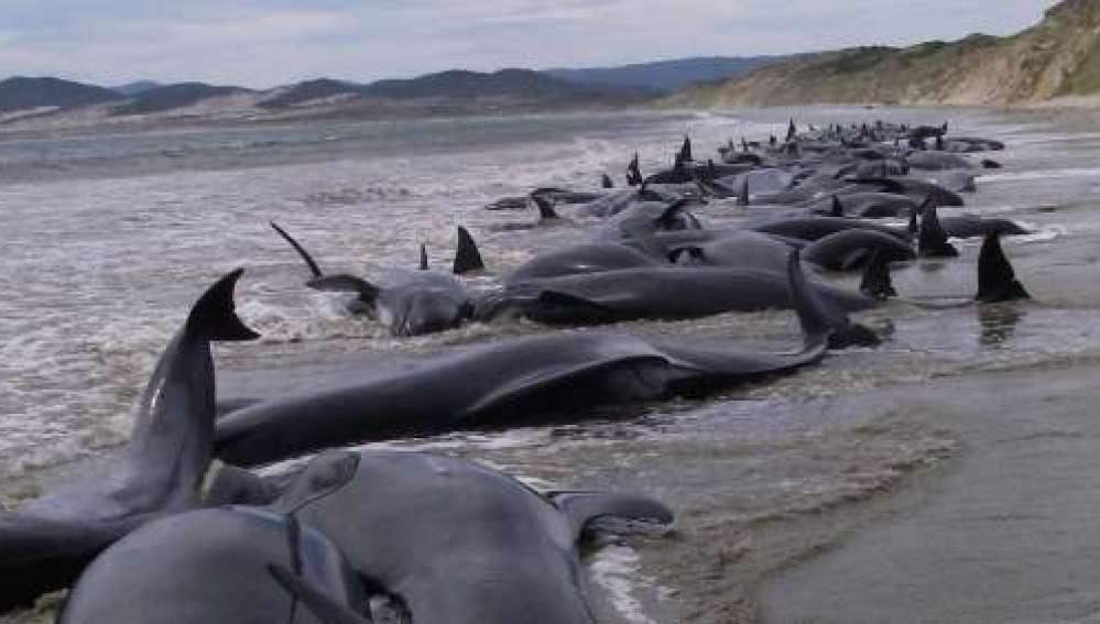 Ballenas varadas en la costa