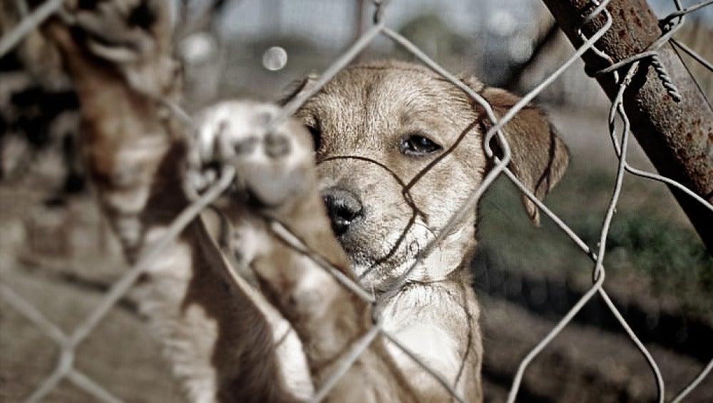 Imagen de un perro tras una valla