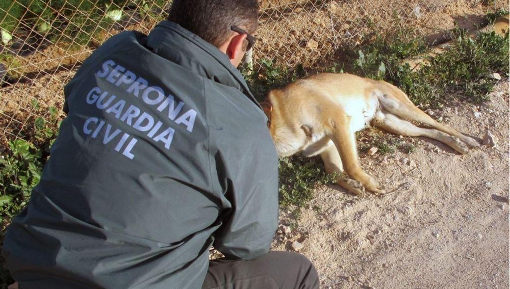 Imagen de archivo de la Guardia Civil atendiendo a un animal