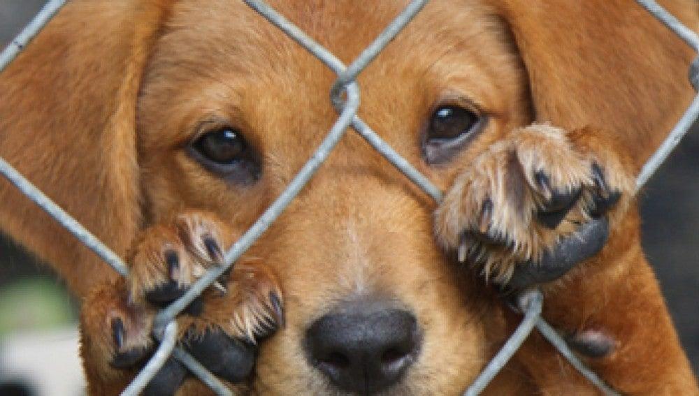 Un perro abandonado en un refugio