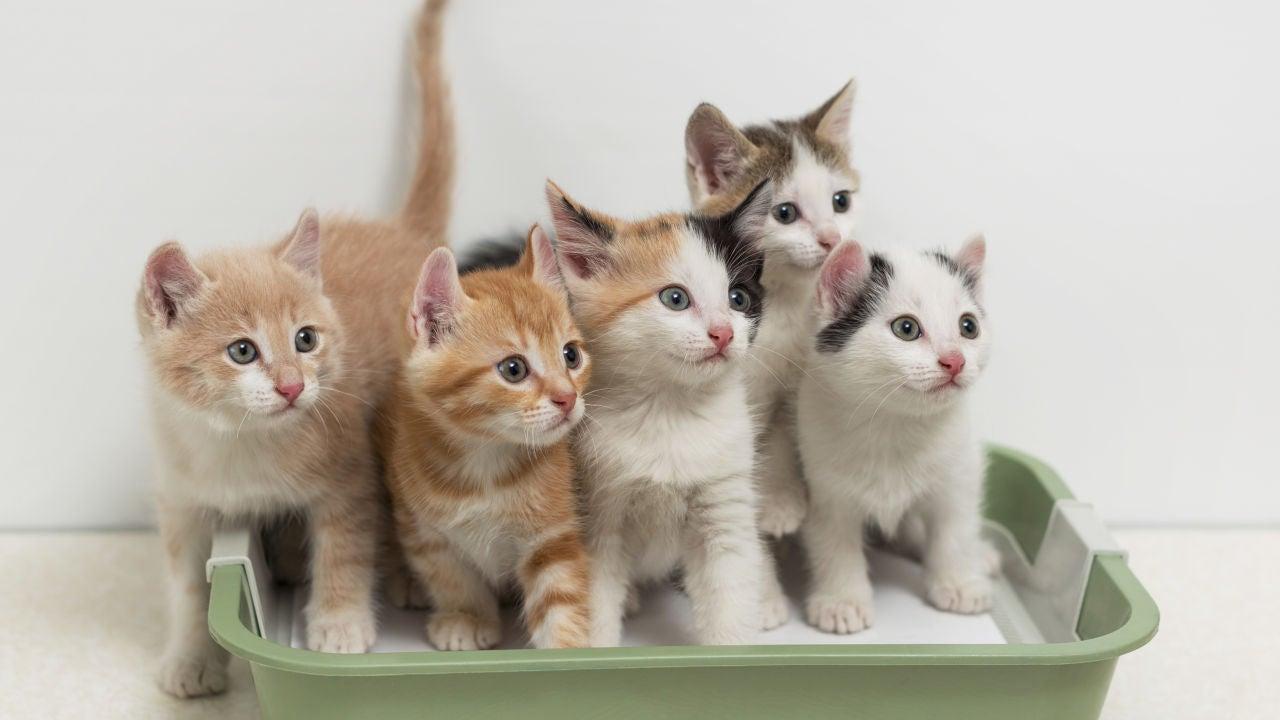 Gatos en su arenero