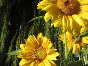 Plantas para revolucionar nuestra vida: inventos que 'copian' al reino vegetal