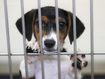 Un perro, en una jaula
