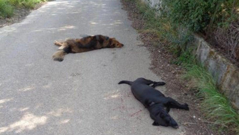Imagen de los dos animales fallecidos