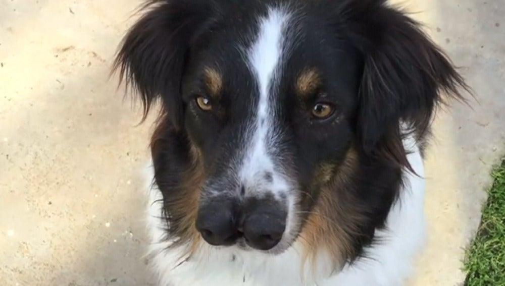 Imagen del perro con dos narices
