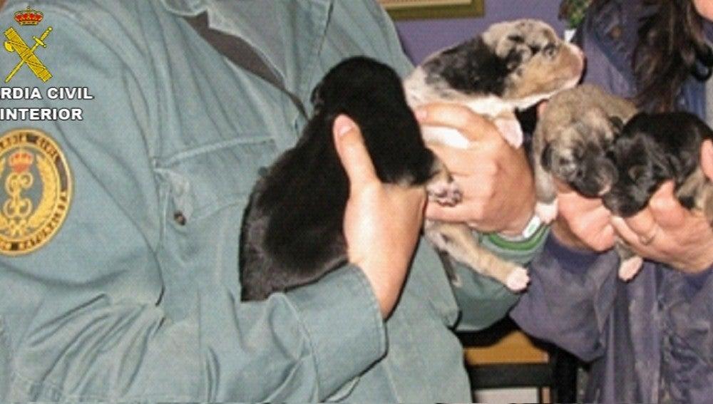 Imagen de los cuatro cachorros rescatados