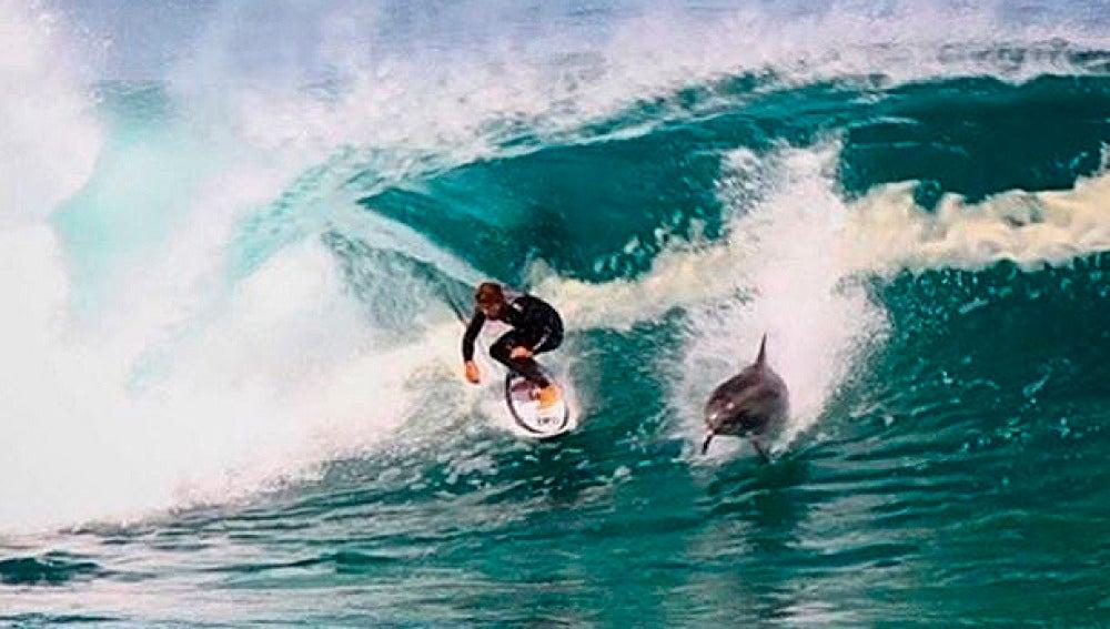 Momento en que el delfín se cruza con el surfista