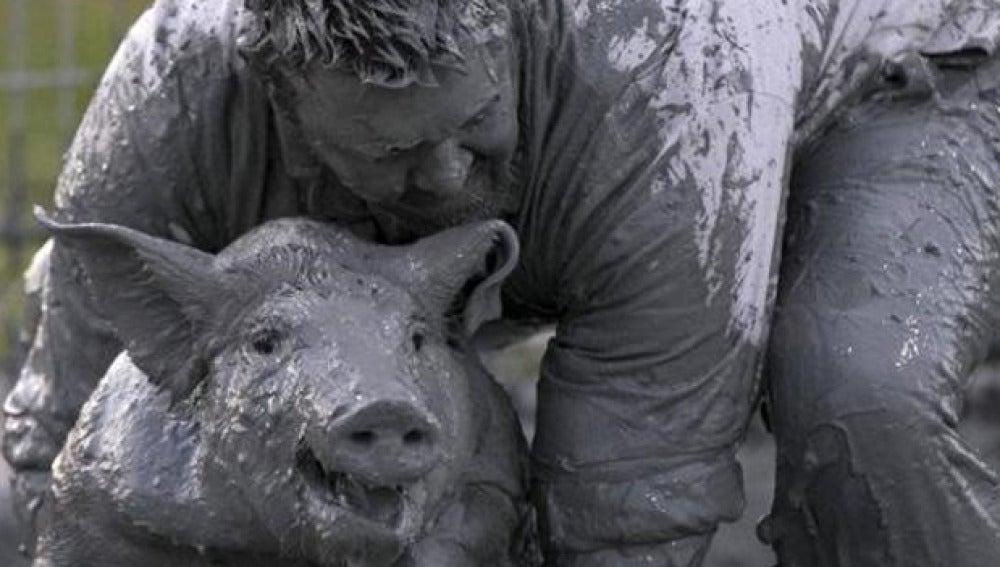 Imagen de un cerdo engrasado
