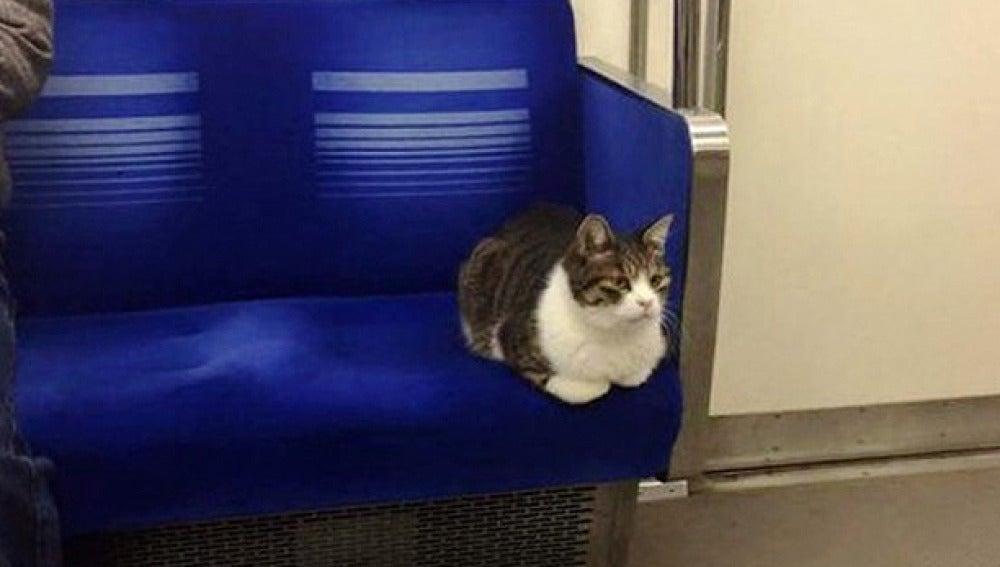 El gato que viaja habitualmente en el metro de Tokio