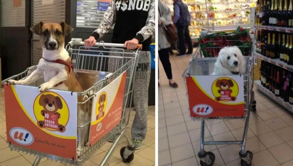 Un supermercado adapta sus carros para que los perros puedan acompañar a sus dueños a hacer la compra