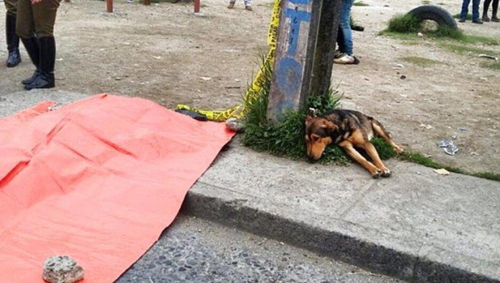El perro junto al cadáver de su dueño
