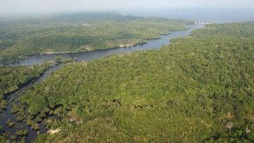 Fotografía de la floresta amazónica brasileña