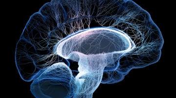 El cerebro humano está constantemente pr