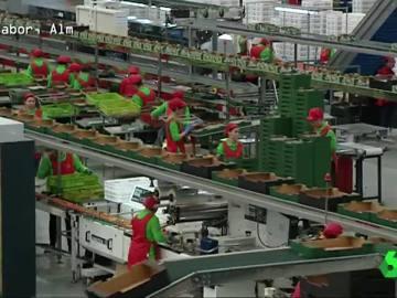 Fábrica de alimentos ecológicos