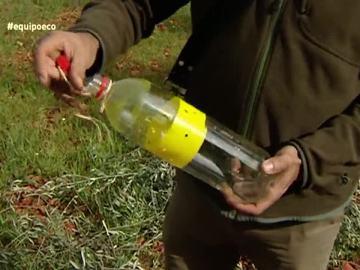Botella como trampa para insectos