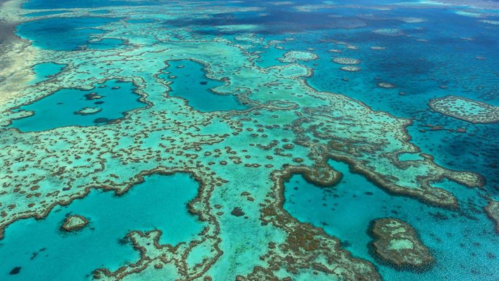 Fotografía facilitada por la Autoridad del Parque Marino de la Gran Barrera de Coral, frente a la costa noreste de Australia