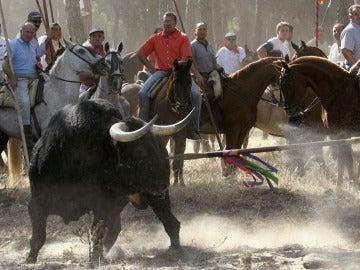 Celebración del Toro de la Vega del año 2006