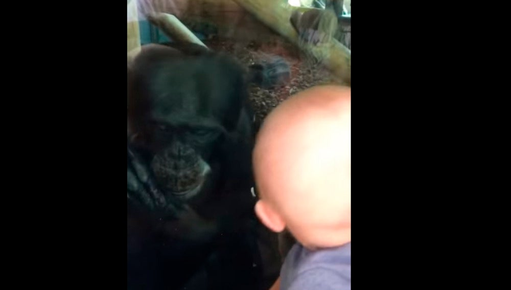 Chimpancé y bebé