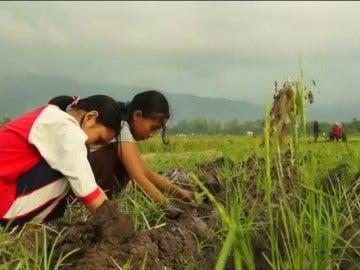 Frame 0.0 de: Denuncian la utilización de miles de niños como mano de obra en plantaciones de tabaco de Indonesia