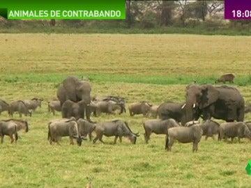 Frame 51.8862 de: trafico de animales