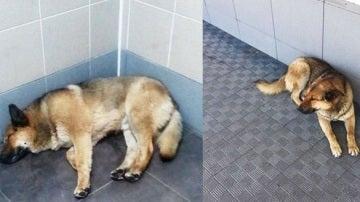 El animal espera desde hace una semana a su dueño en el aeropuerto