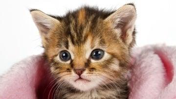 Imagen de archivo de un gato pequeño
