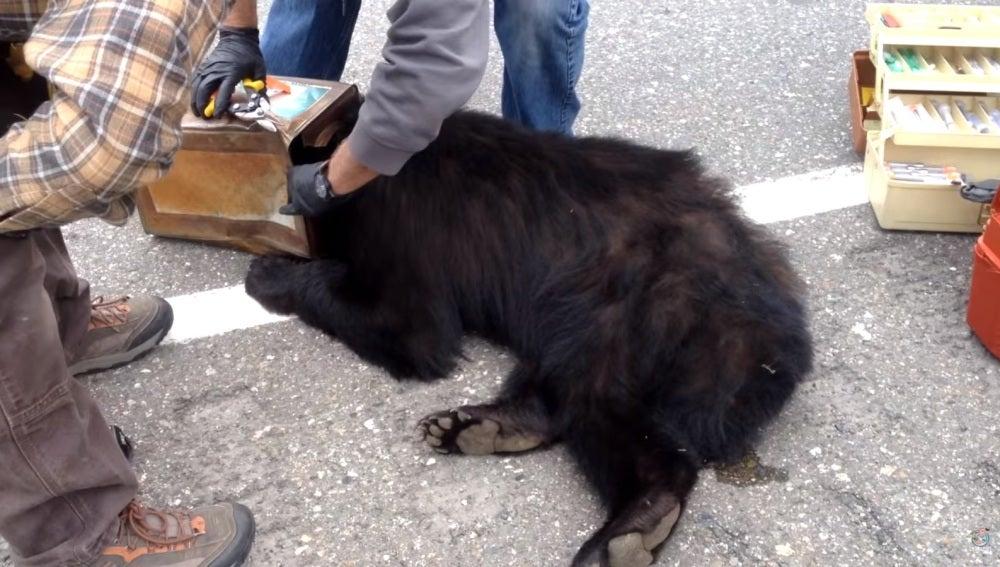 El animal tenía la cabeza atrapada en una lata