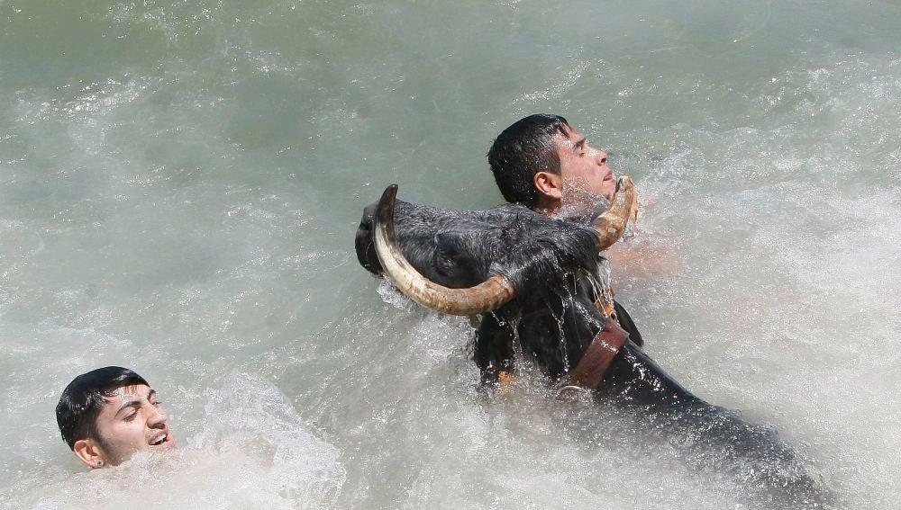 Dos mozos tratan de evitar al toro una vez caidos en las aguas del puerto