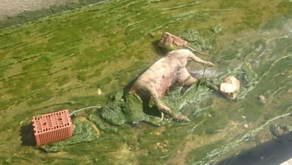 Imagen de cómo fue encontrado el perro en Valencia