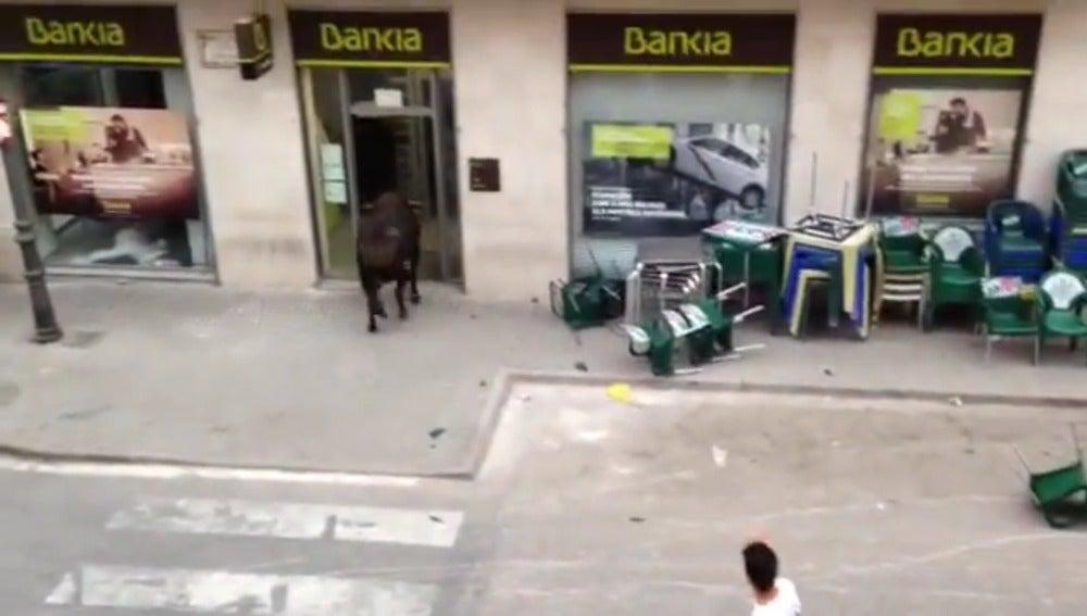 Un toro se cuela en una oficina de Bankia