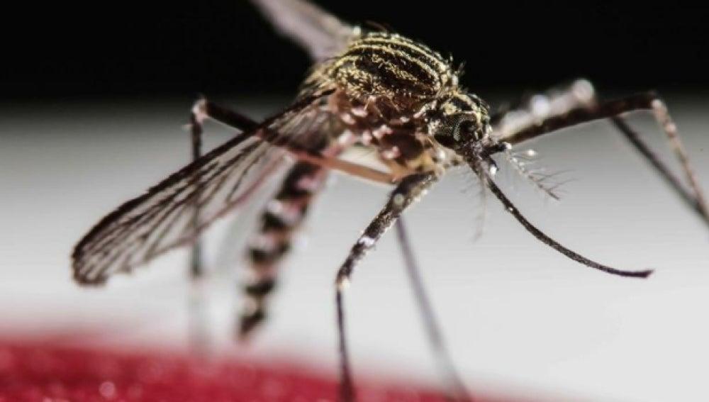 La Agencia Valenciana de Emergencia comienza las brigadas antimosquitos en la provincia de Castellón.