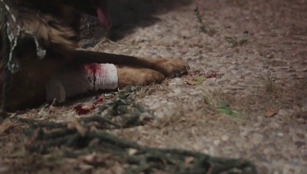 Frame 5.482127 de: #YoSíPuedoContarlo, la nueva campaña de la Guardia Civil con famosos que rechazan el maltrato animal