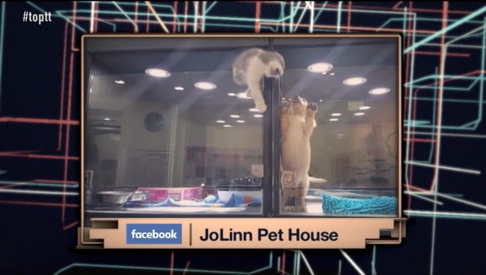 JoLinn Pet House
