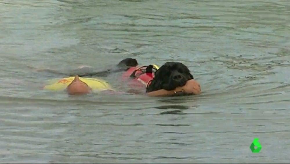 Frame 24.900261 de: Los perros de salvamento pueden arrastrar a dos personas a la vez