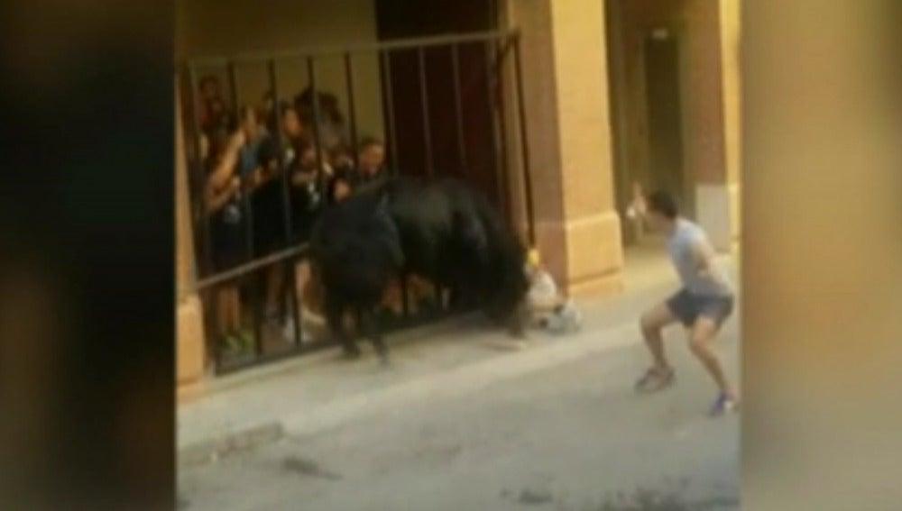 Un toro cornea a un hombre de 60 años durante el festejo del 'Bou en Corda' de Turís, Valencia