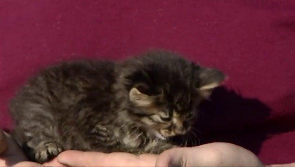 Frame 41.900843 de: Rescatan a un gato que llevaba varios días encerrado en una tubería gracias a Facebook
