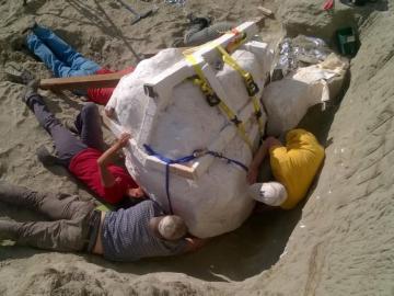 Cráneo de un Tiranosaurio Rex hallado en EEUU
