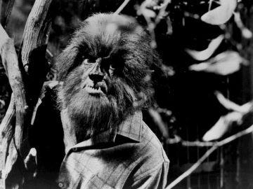 De dónde surge el mito del 'hombre lobo'