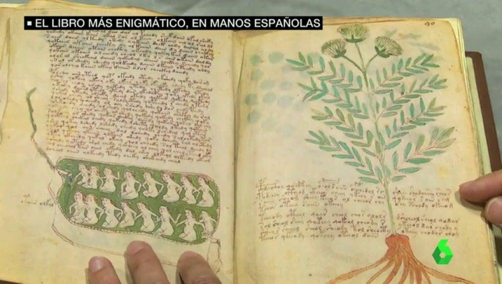 Páginas del Códice Voynich.