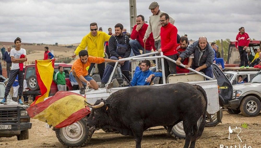 Los participantes del encierro acosan al toro con un vehículo.