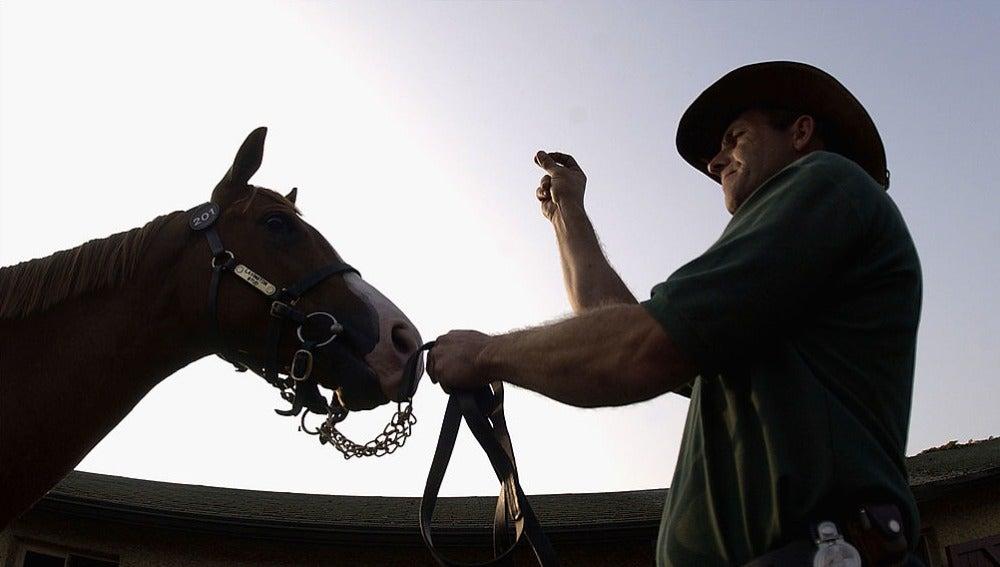 Un caballo en una imagen de archivo