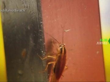Cucarachas en Pesadilla en la cocina
