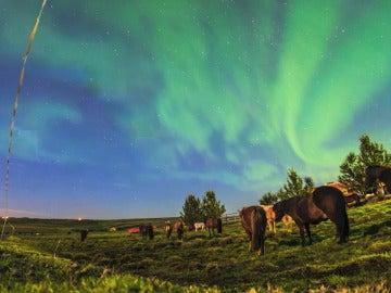 Caballos pastando bajo auroras boreales