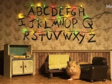 Imagen de 'Hamster Things'