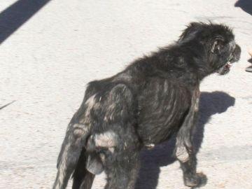 Fotografía de uno de los perros de José Luis Moreno