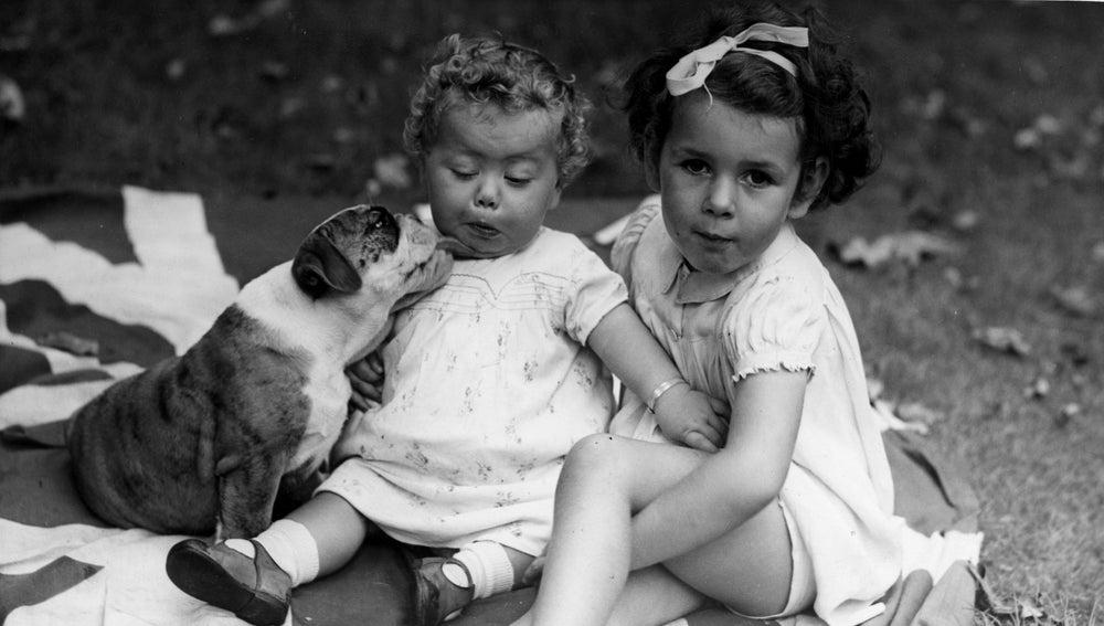 Un bulldog le lame la cara a un bebé