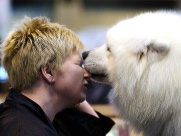 Perro le muerde la nariz a su dueño