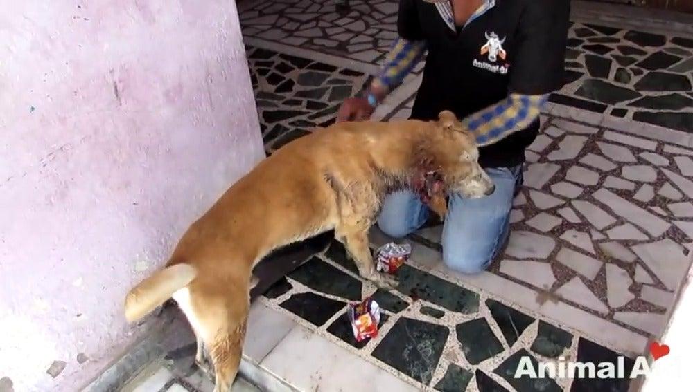 Frame 62.993733 de: La segunda oportunidad de Dylan, un perro abandonado y moribundo por el ataque de gusanos carnívoros